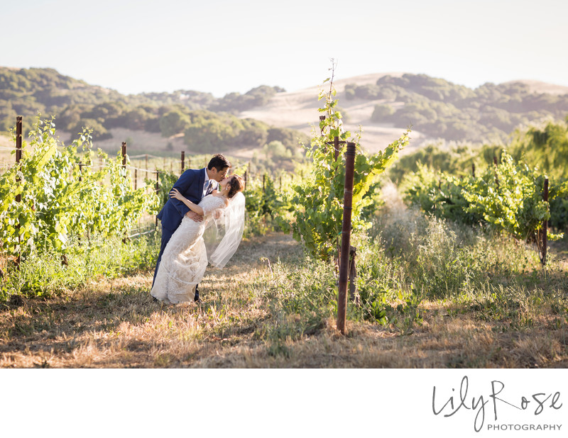Couple Cline Cellars Sonoma Wedding Photographer