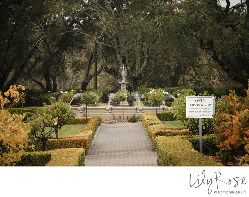 The Ledson Winery Fountain on a Wedding Day