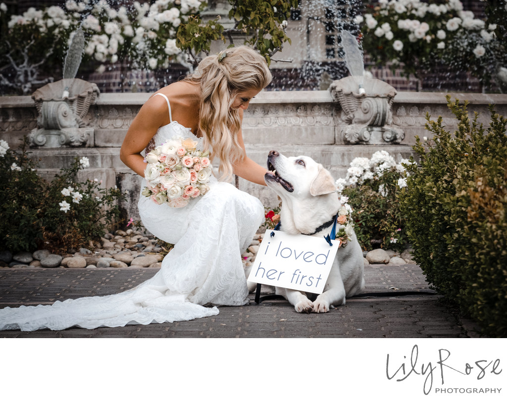 Micro Ledson Wedding with Dog Labrador Retriever