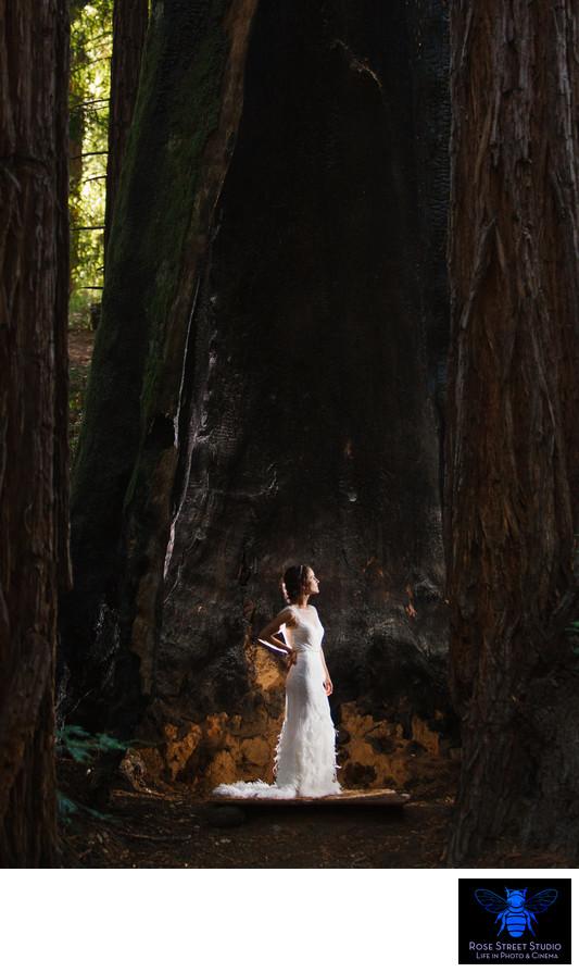 Outdoor Wedding In The Redwood Forest Of Mendocino