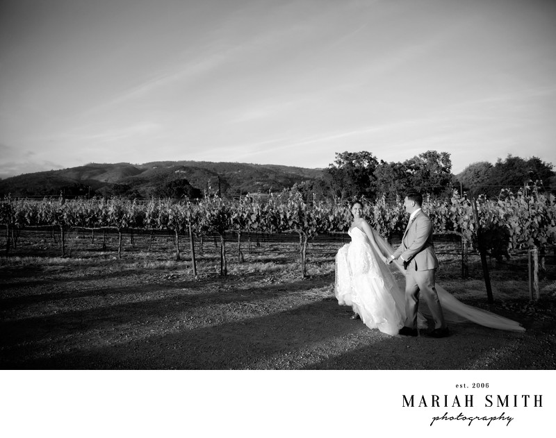Wedding Portrait in Sonoma Vineyard