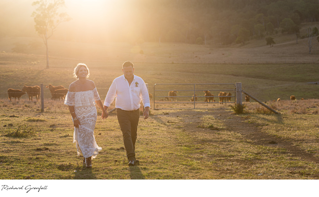 Bride and Groom at sunset at a Hinterland Farm with cows