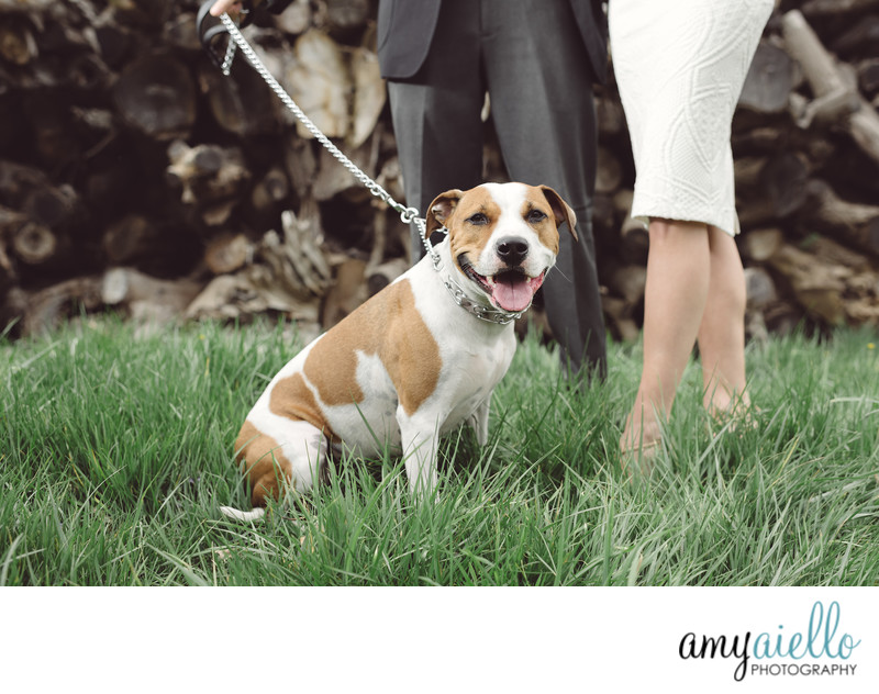 monte bello estate lemont il chicago luxury wedding photographer amy aiello photography