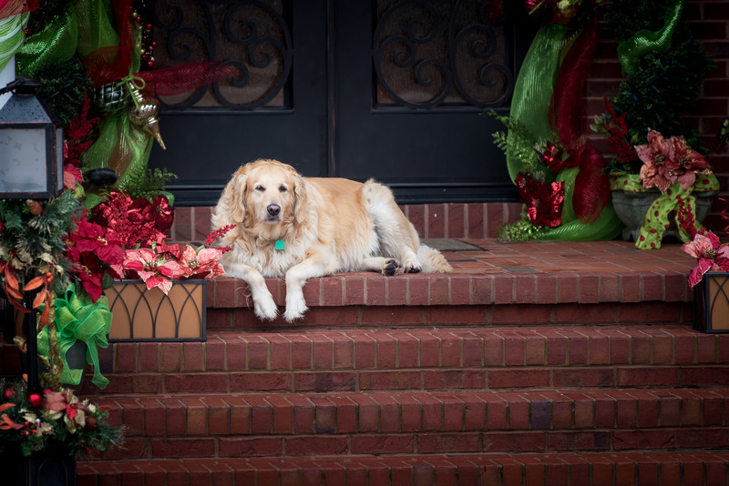 Best Pet Photographer Dalton Ga