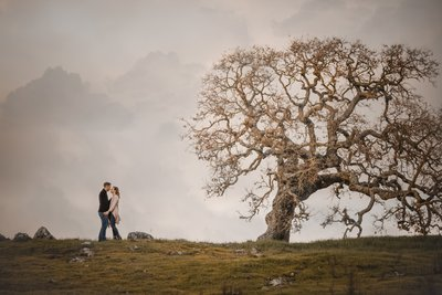 Sacramento Wedding Photographers Oak Tree Engagement
