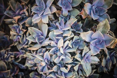 Sacramento Wedding Photographers Succulents