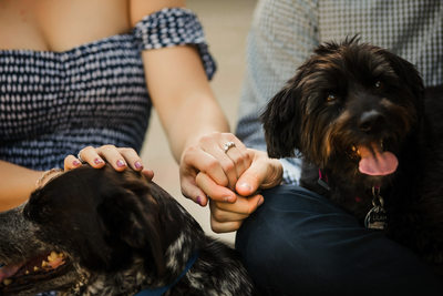 Longwood Gardens Engagement Photos with Dogs