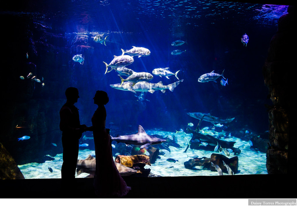 Virginia Aquarium Wedding - Shark Tank love