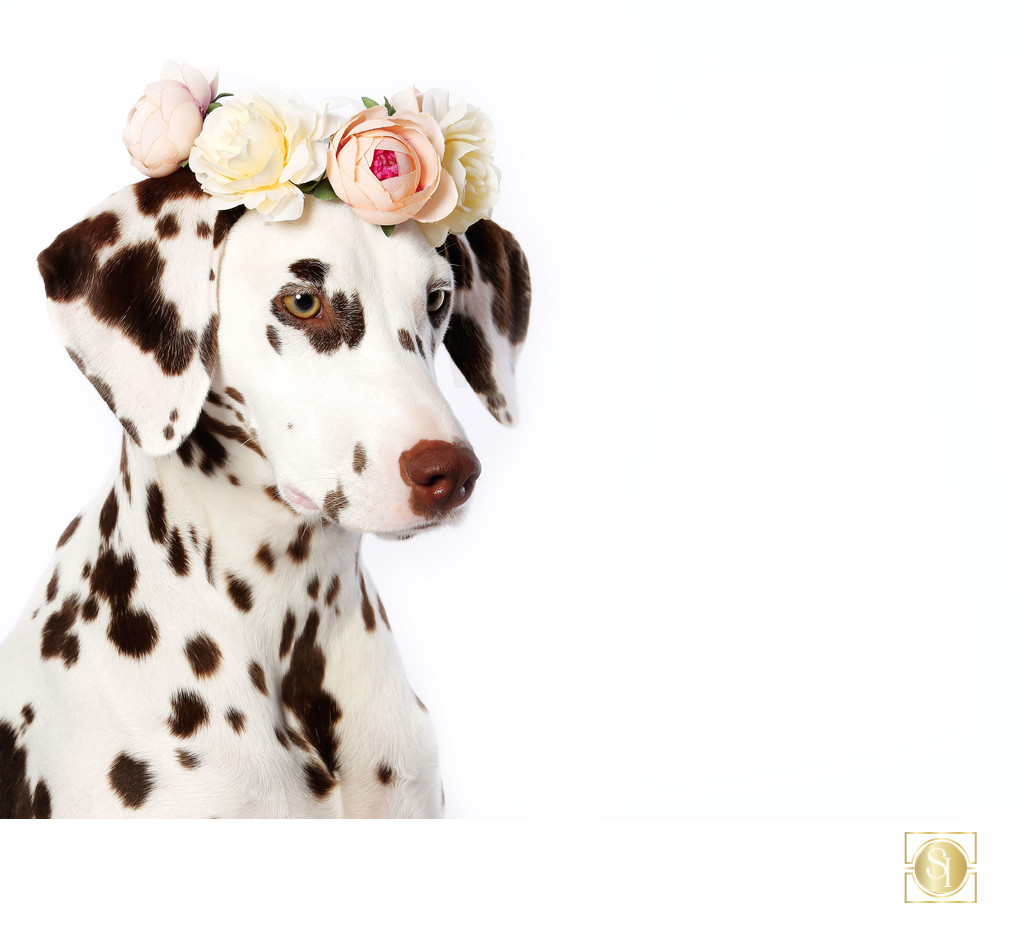 Dalmatian Flower Crown
