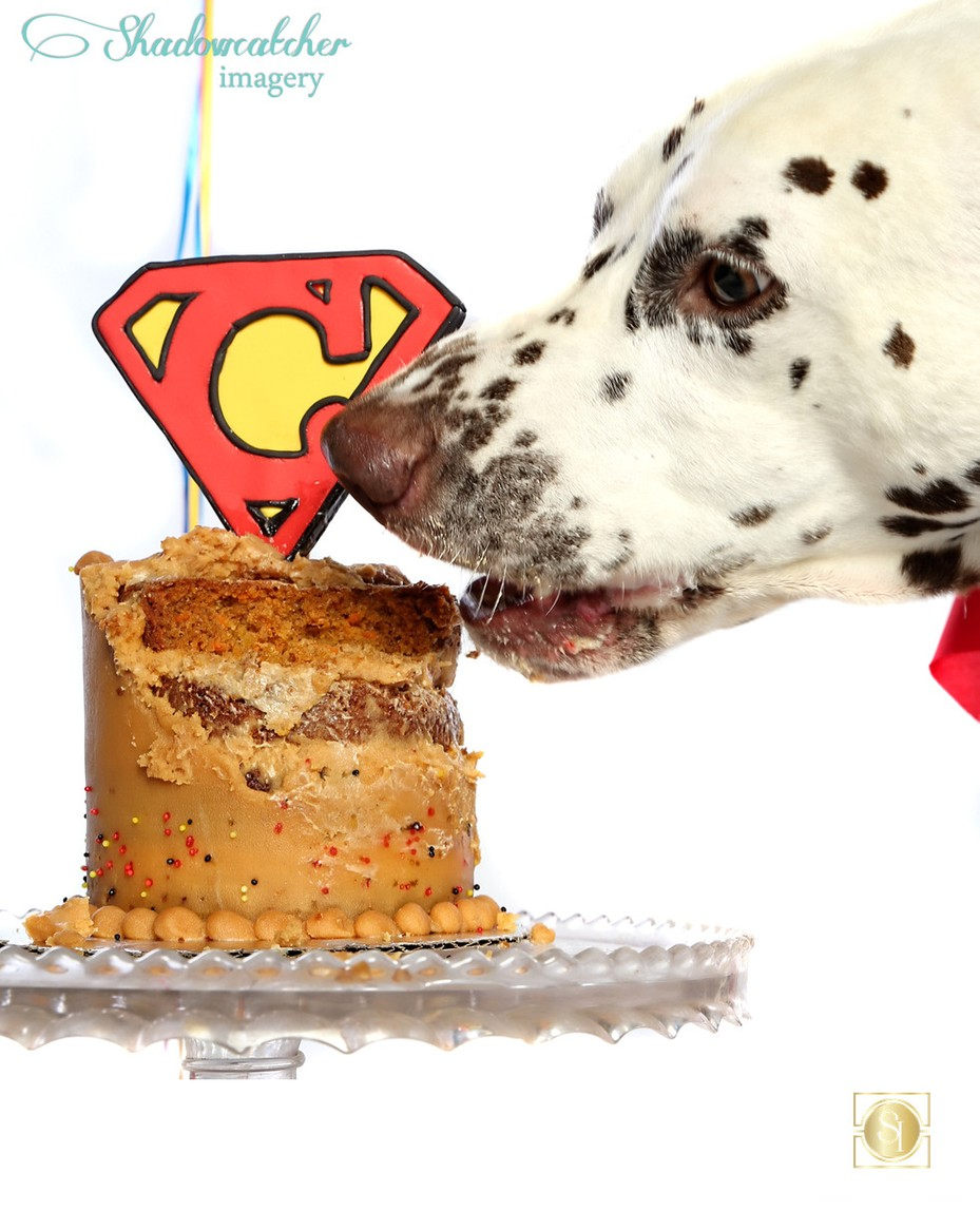 Dog Birthday Cake Smash Photographer