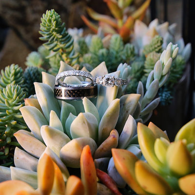 Wedding Ring Photo in Succulents