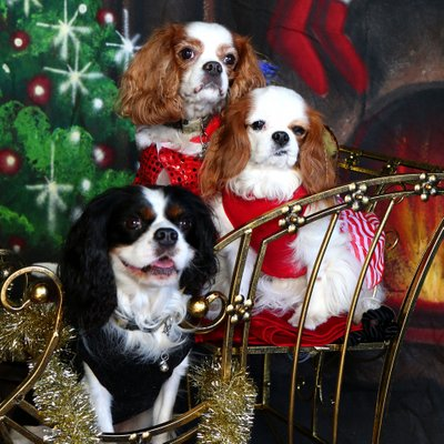 Photographer for Holiday Family and Pet Photos
