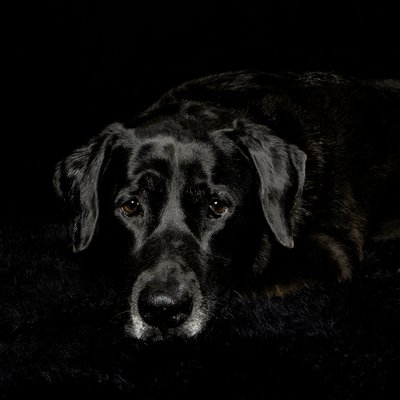 Black Dog, Black Background