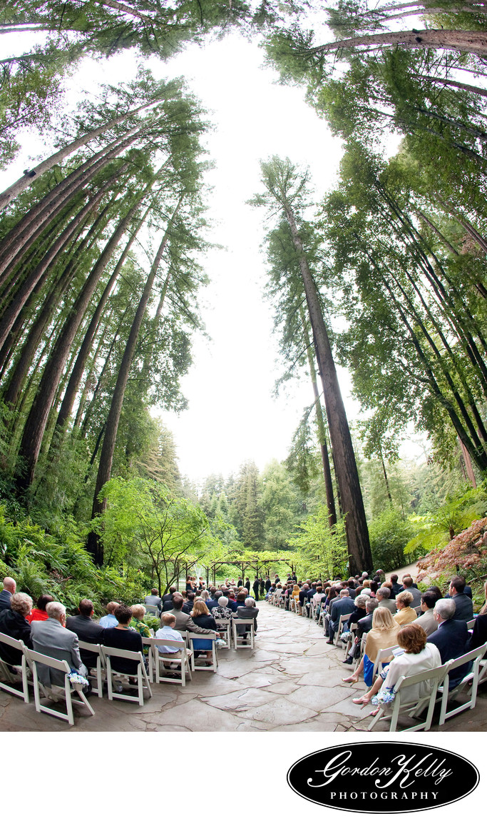 Nestldown Wedding Photography, Redwood Trees