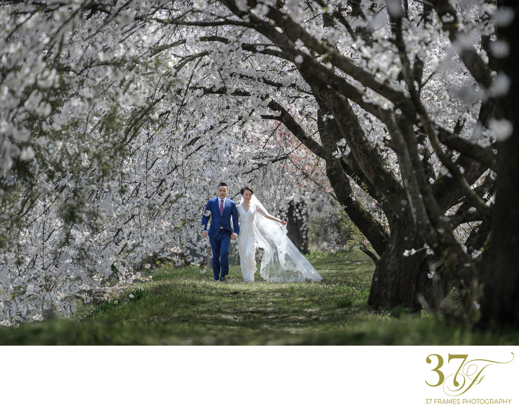 Cherry Blossom Elopement Packages in Japan