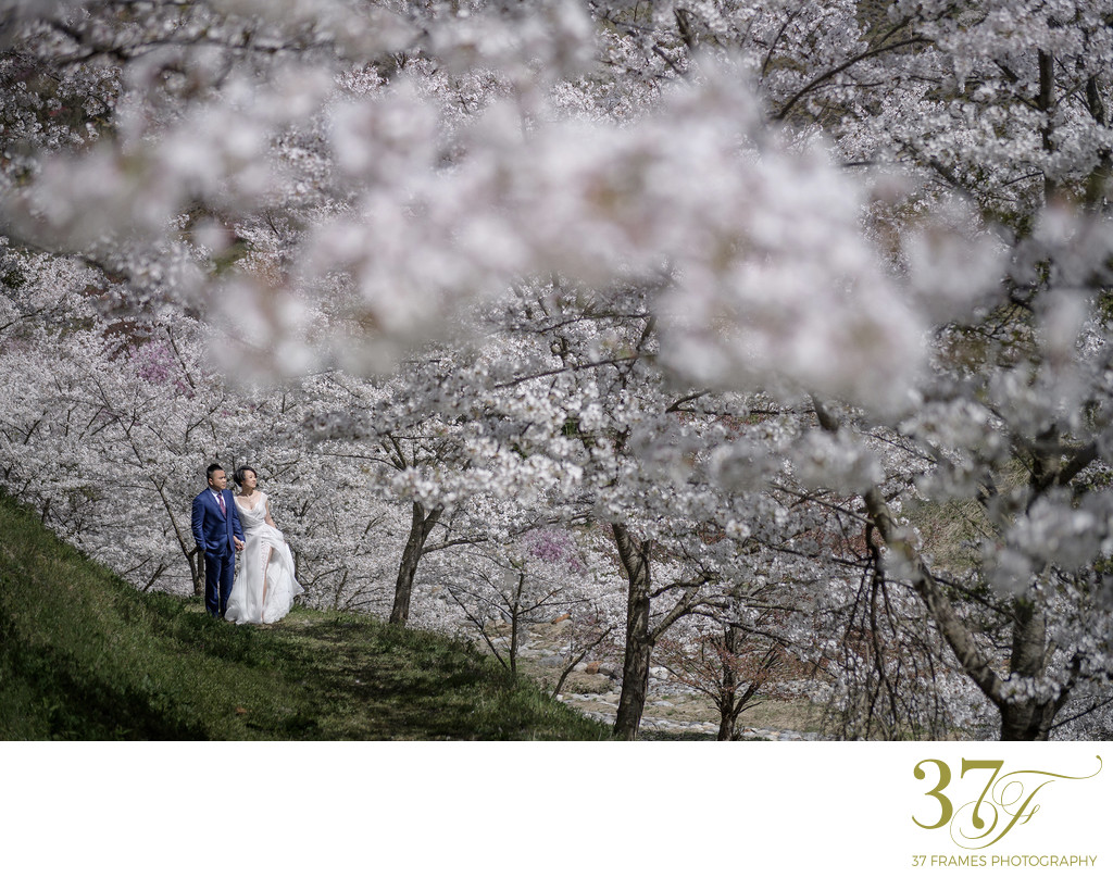 Private Cherry Blossom spots to elope in Japan