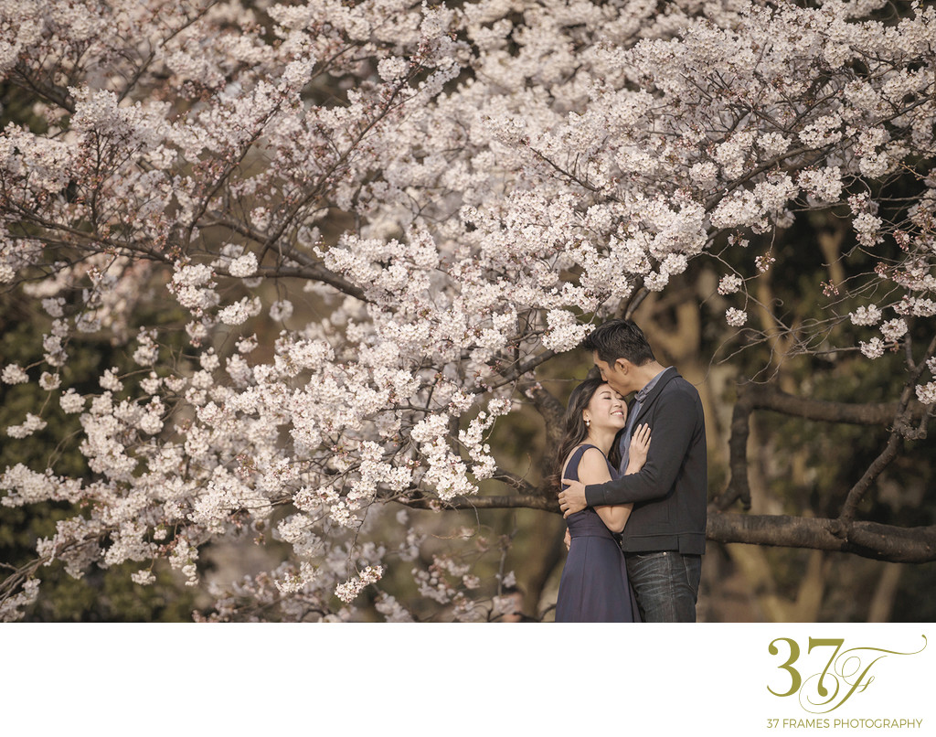 Tokyo Cherry Blossom Engagement Photography