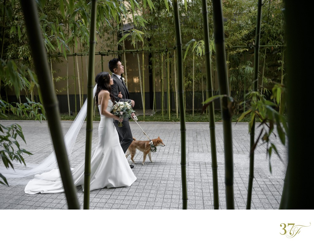 Bride and Groom | Puppy Love