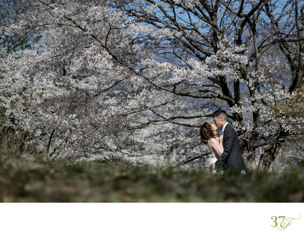 Cherry Blossom Elopements