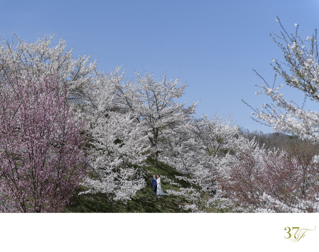Get Married in Japan Under Cherry Blossoms