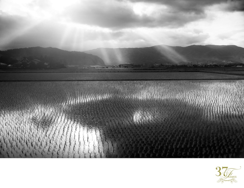 Sunbeams Over Japanese Rice Fields