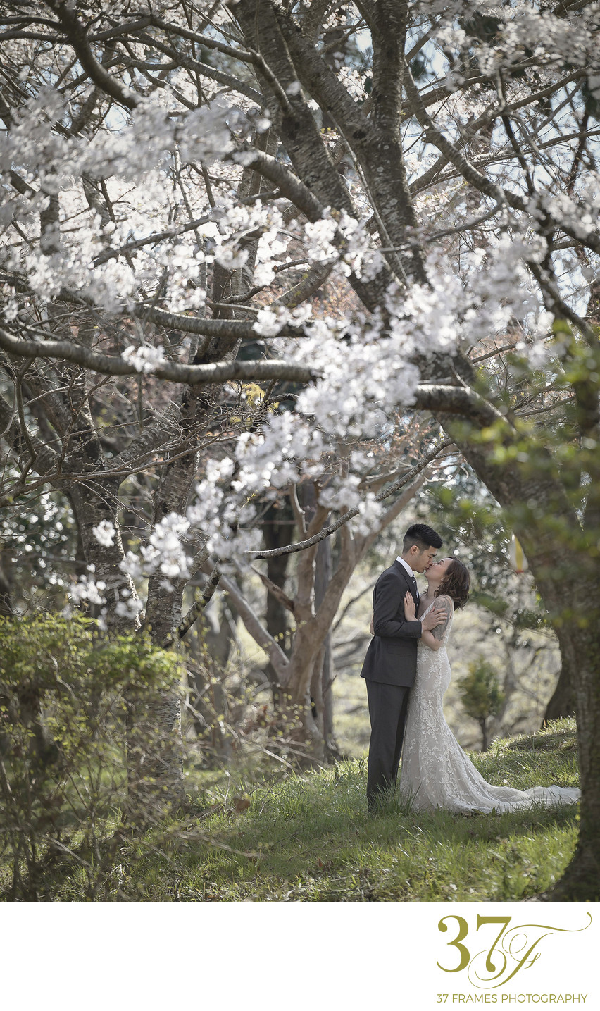 Adventure Elopements in the Cherry Blossoms