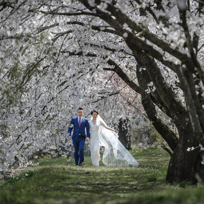 Best Pre-Wedding Cherry Blossoms Japan