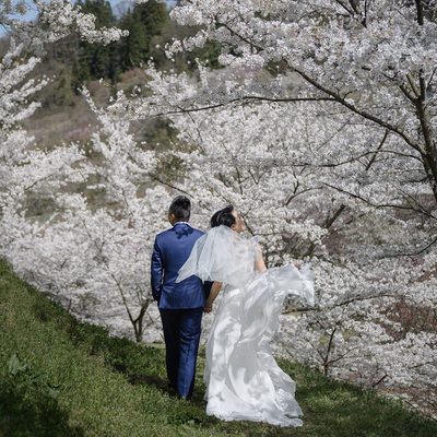 Elope Under the Cherry Blossoms