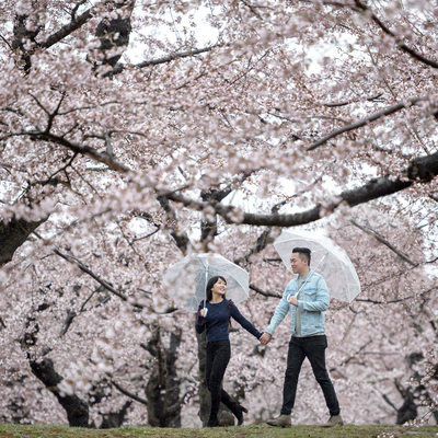 Cherry Blossoms in the Rain | Japan Engagement Photos