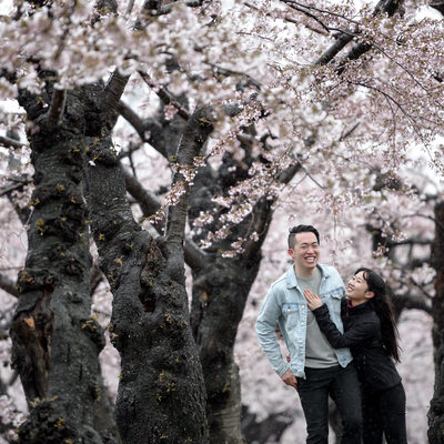 Hakodate Engagement Photographer | Cherry Blossoms