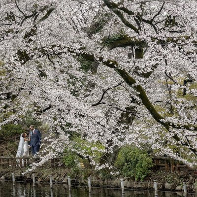 Eloping under Cherry Blossoms in Tokyo