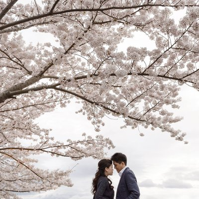 Kyoto Cherry Blossom Engagement Photos