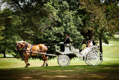 Horse and Carriage at Lakeview Resort - Tim Ray Photography