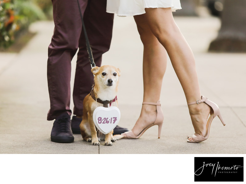 Torrance Photography Studio Engagement Walking Dog