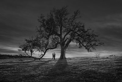 Sunset Engagement Portrait Couple Live Oak Tree