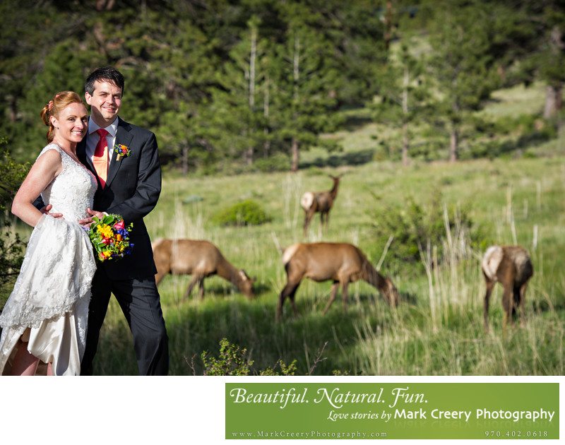 Elk in Estes Park wedding photo