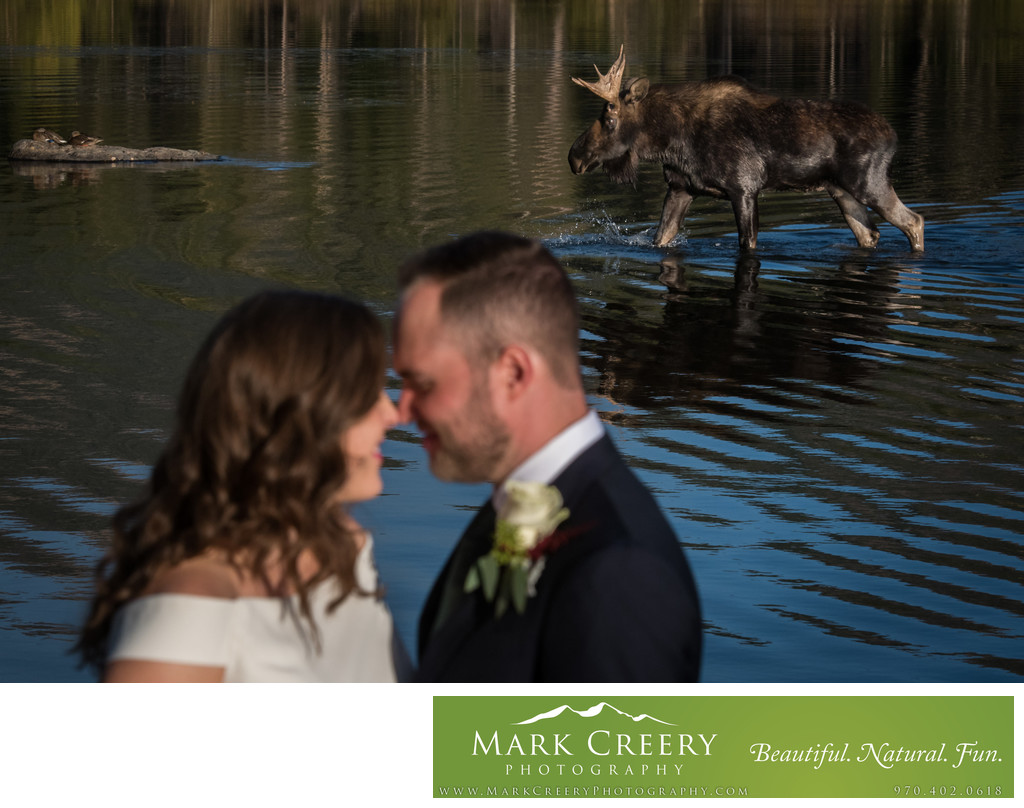 Wedding photo with moose at Sprague Lake