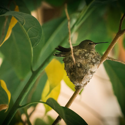 Humming Bird at John´s place