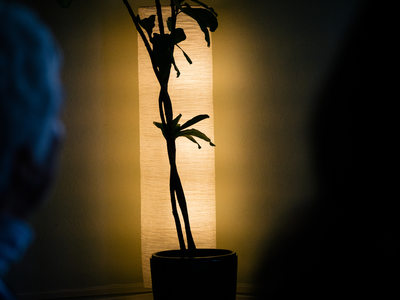 Plant in front of lamp with people