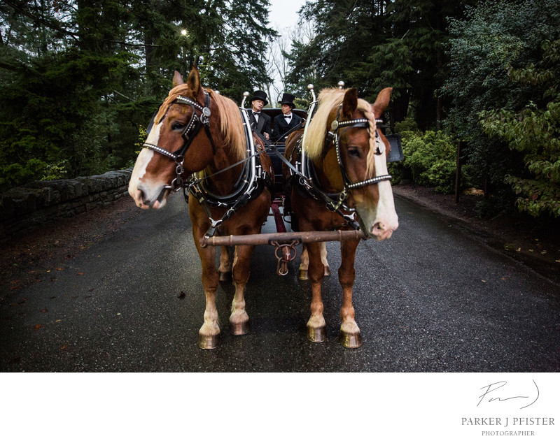 Horse Drawn Carriage Biltmore Wedding Photos