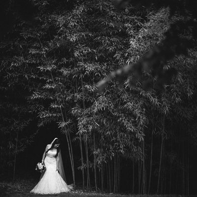 Bamboo Forest Destination Wedding Photography