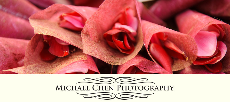 wedding photographer in montego bay