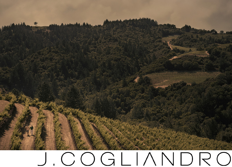 Rolling Vineyards for an Engagement in Napa Valley, CA
