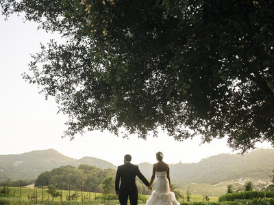 Wedding Photography in Wine Country in Yountville, CA