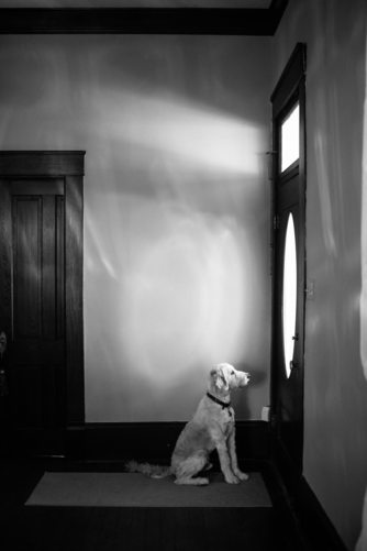 Groomsdog at Chandelier Grove Houston