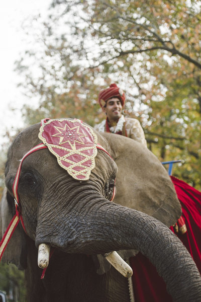 The Groom on Elephant Weddings at Chateau Cocomar