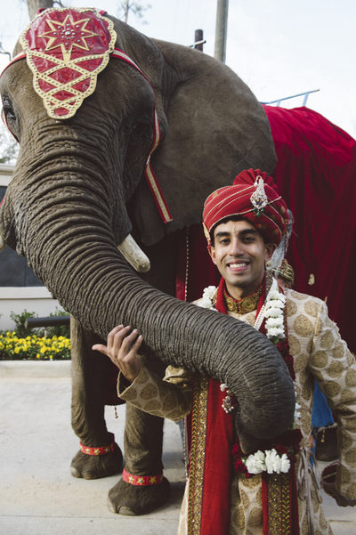 The Groom and his Elephant Best Houston Photography