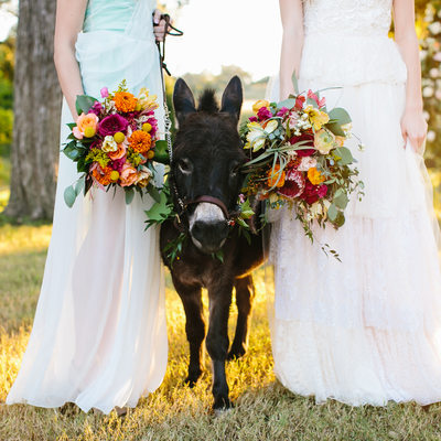 Texas photographer, Pecan Springs, Wedding Donkey