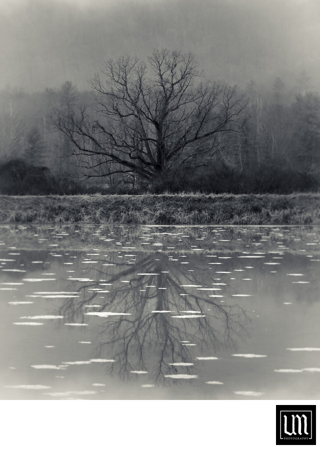 Old tree reflecting on frozen pond