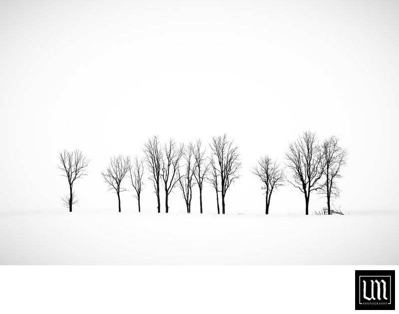 Lone trees in winter